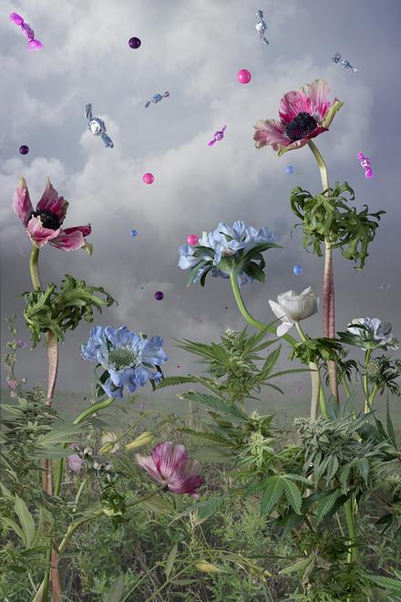 Jason DeMarte, Candied Cultivation