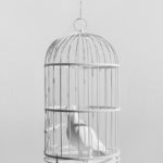 Dorota and Steve Coy, Caged Bird