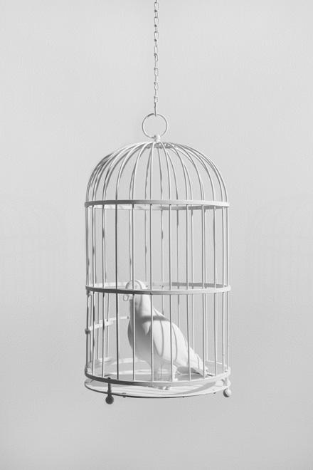 Dorota and Steve Coy, Caged Bird